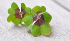 lucky-clover-1933008_1920